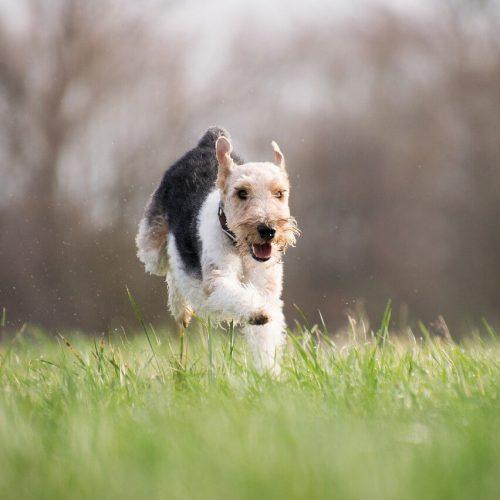 Fűmagkeverék és a kutya